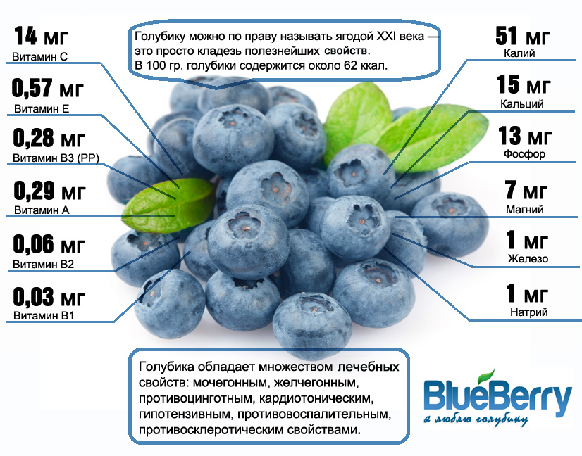 logo blueberries