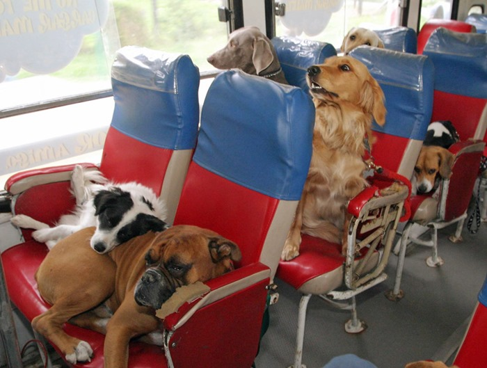 cats in different transport