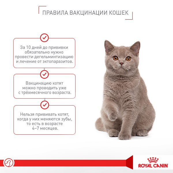 Vaccination of the kitten